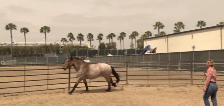 Disneyland Circle D Ranch Horse Training