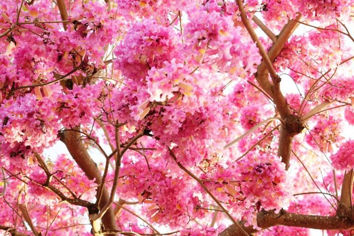 Cherry Blossom Partners