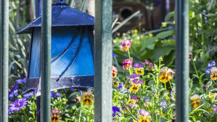 Disneyland Spring 3