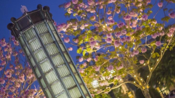 Disneyland Spring 5