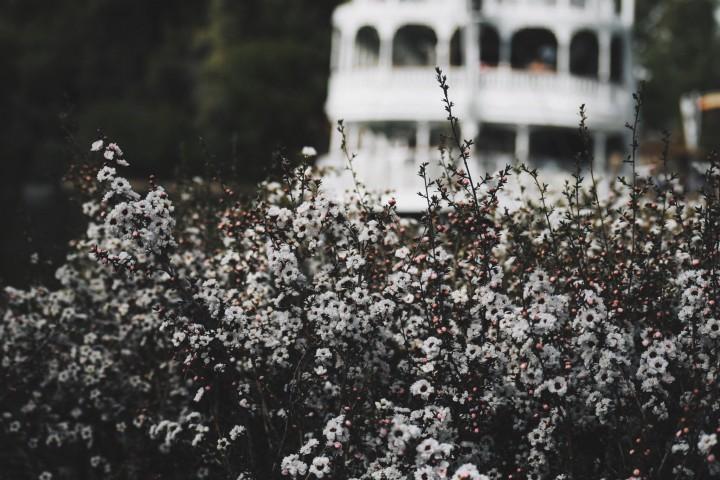 Disneyland Springtime 7