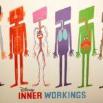 Inner Workings Poster Paul Internal Organs Layers